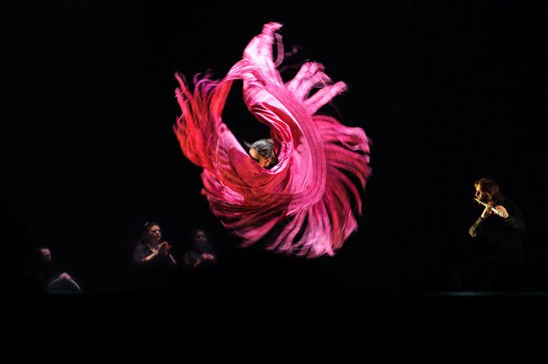 Flamenco by Rafael Aviles